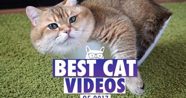 Τα πιο απίθανα και διασκεδαστικά βίντεο με γάτες για το 2017