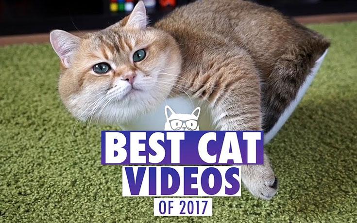 γάτες Βίντεο αστεία βίντεο