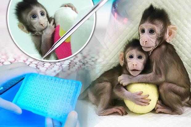 μαϊμού κλωνοποίηση