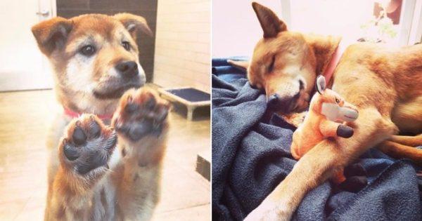 Σκυλίτσα με θλιβερό παρελθόν είναι πανευτυχής στο νέο της σπίτι