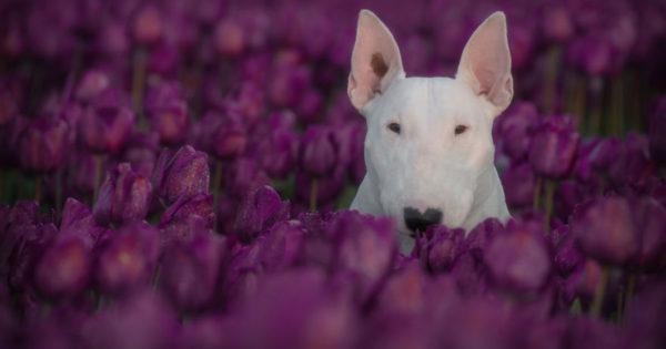 Γνωρίστε την Claire, τη σκυλίτσα που λατρεύει να ποζάρει με λουλούδια