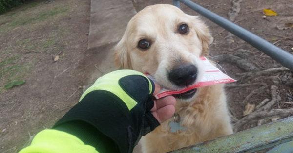 Σκυλάκι λατρεύει την αλληλογραφία και ο ταχυδρόμος συνεισφέρει σε αυτό
