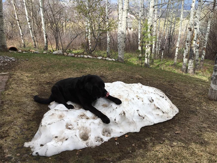 χιόνι Λαμπραντόρ