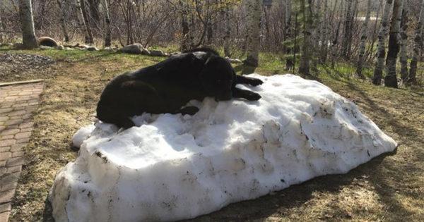 Αυτό το σκυλάκι απλά δε θα αφήσει την τελευταία στοίβα χιονιού να χαθεί