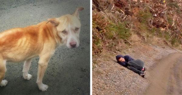 Αυτή η γυναίκα έσωσε έναν αδέσποτο σκύλο με τον πιο έξυπνο τρόπο