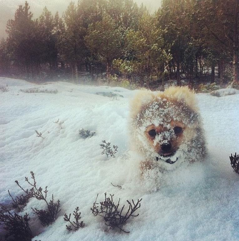 χιόνι ζώα