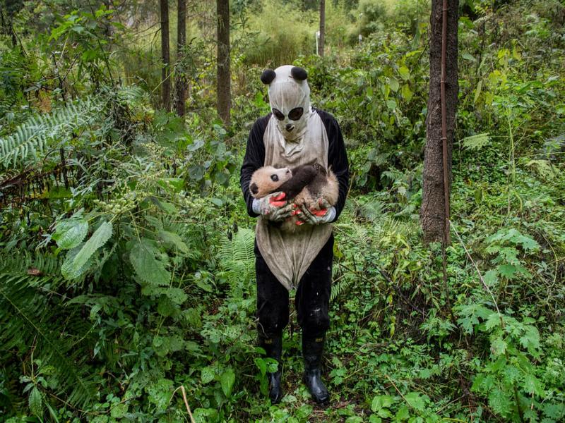 φωτογραφίες ζώα Άγρια Ζωή