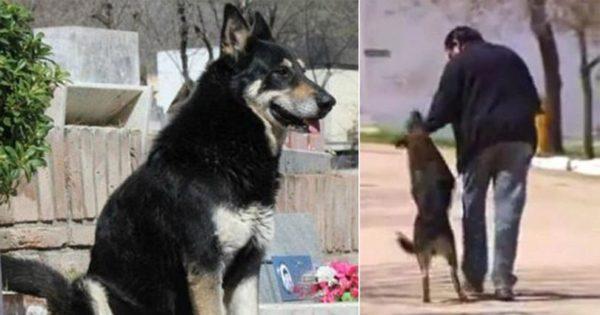 Πιστός σκύλος πέθανε στο τάφο του αφεντικού που κοιμόταν για 11 χρόνια