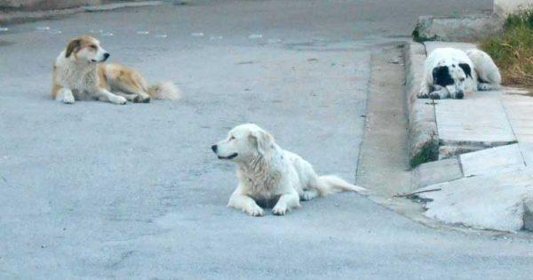 Άρτα: Στην Αστυνομία το υλικό από τις κάμερες με την εγκατάλειψη σκύλων έξω από το καταφύγιο