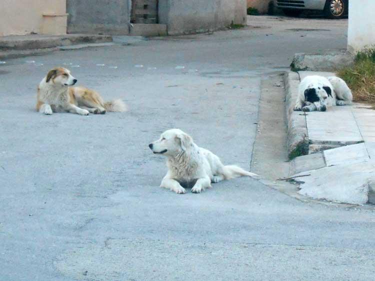 εγκατάλειψη ζώων