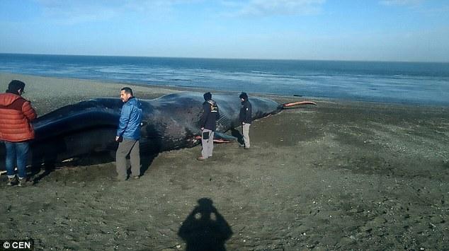 φάλαινα κακοποίηση ζώου