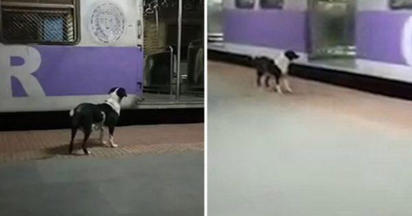 Κουτάβι περιμένει κάθε βράδυ σε σταθμό τρένου και ακολουθεί συγκεκριμένο βαγόνι για να βρει τον ιδιοκτήτη του που το εγκατέλειψε