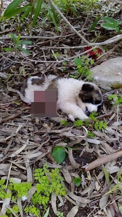 Μεσολόγγι κακοποίηση σκύλων