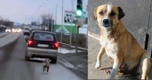 Σκύλος τρέχει χιλιόμετρα πίσω από το αυτοκίνητο του ιδιοκτήτη του που τον παράτησε