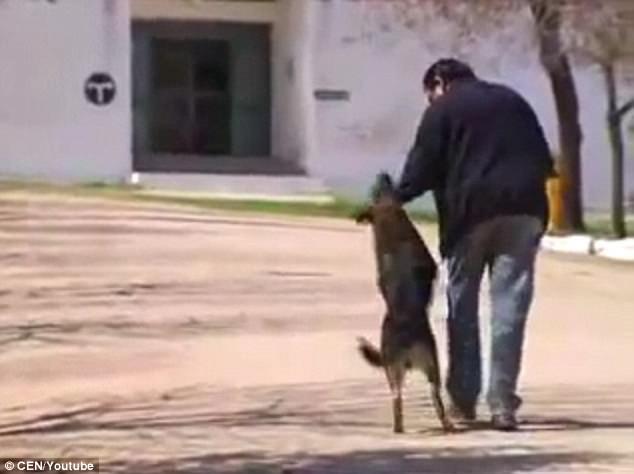σκύλος και αφεντικό Σκύλος αφεντικό