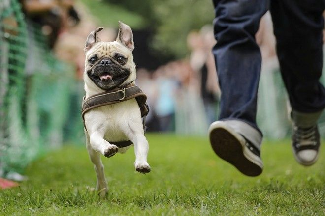 Σκύλος σκυλιά διάσημα σκυλιά