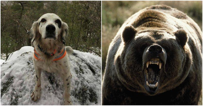 Σκύλος αρκούδα