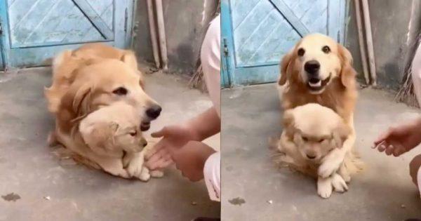 Σκυλίτσα δεν θέλει να ακουμπούν το μωρό της και γίνεται ανάρπαστη