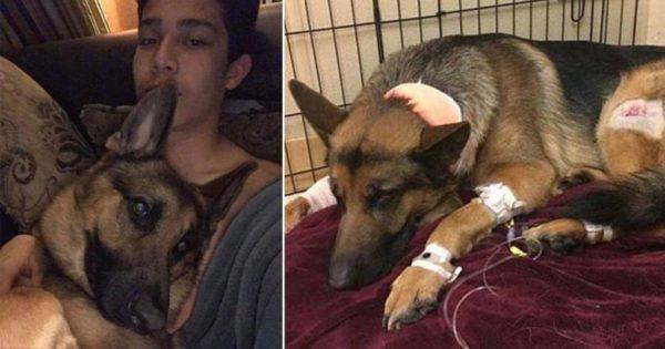 Σκύλος έφαγε 3 σφαίρες για να σώσει το 16χρονο αφεντικό του από τους κλέφτες