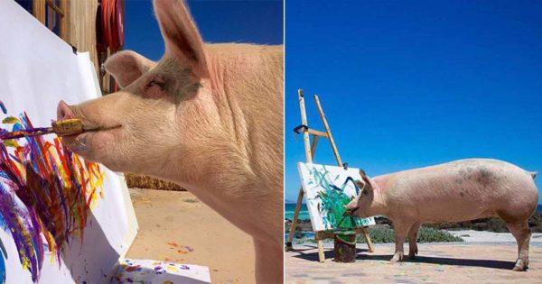 Γουρούνι που σώθηκε από την σφαγή έγινε παγκοσμίου φήμης καλλιτέχνης