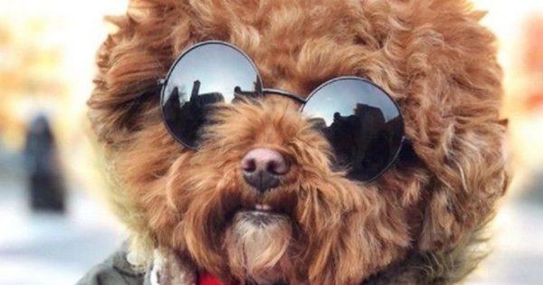 Αυτά είναι τα 5 πιο διάσημα σκυλιά στο Instagram