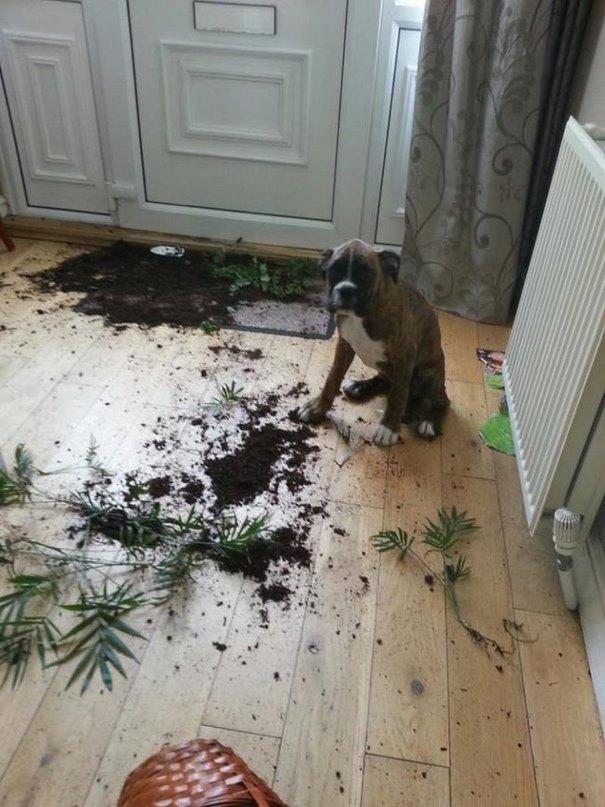 σκυλιά ιδιοκτήτες