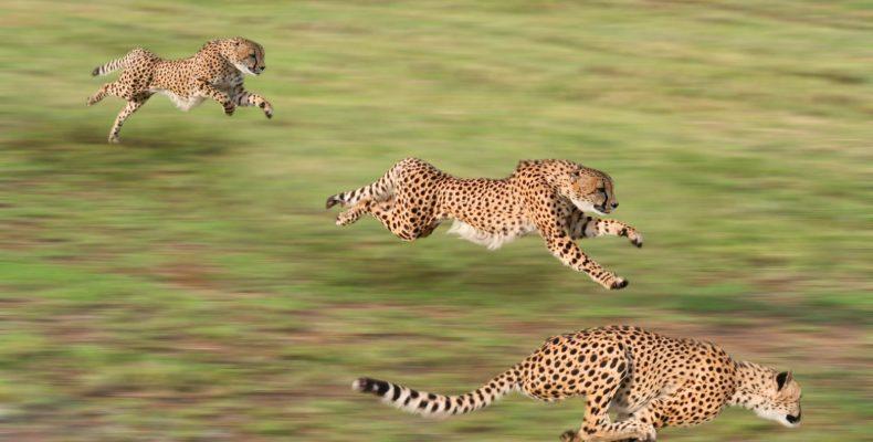 Ταχύτερα ζώα Πιο γρήγορα ζώα Γρηγορότερα ζώα