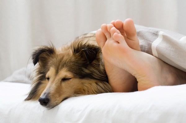 ύπνος με σκύλο Σκύλος