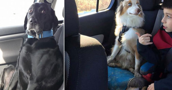 Η ξεκαρδιστική στιγμή που σκύλοι συνειδητοποιούν οτι πάνε στον κτηνίατρο και όχι στο πάρκο