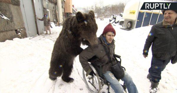 Αρκούδα σπρώχνει τον εκπαιδευτή της που είναι καθηλωμένος σε καροτσάκι