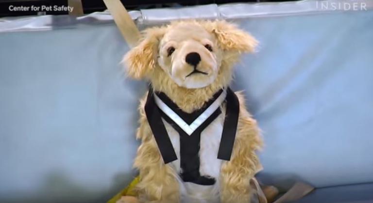 Σκύλος παιχνίδια για σκύλους Βίντεο