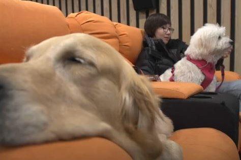 Τώρα μπορείτε να πάρετε τον σκύλο σας στο σινεμά