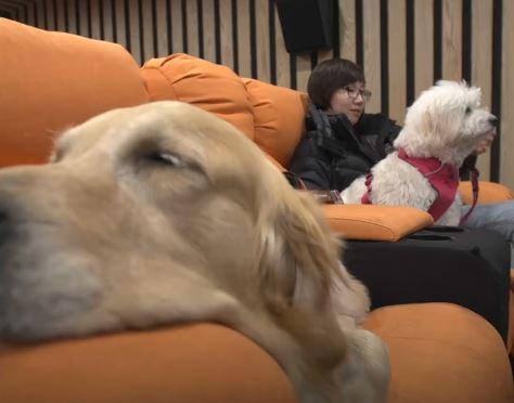 Σκύλος σινεμά κινηματογράφος