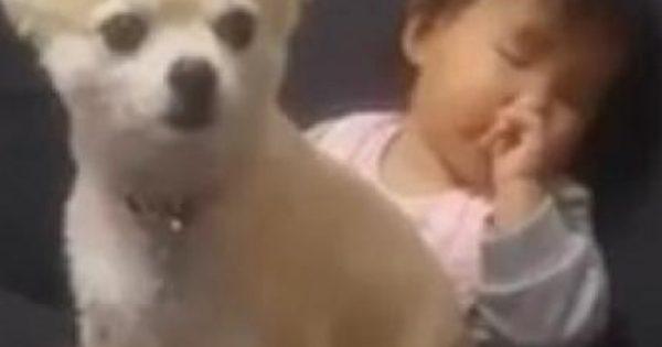 Bίντεο: Παιδάκι προσπαθεί να κοιμηθεί πάνω στο σκυλάκι του!