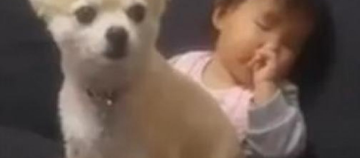 σκυλάκι μωρό Βίντεο