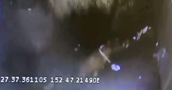 Βίντεο-σοκ: Σκύλος γλυτώνει από πολτοποίηση με σκουπίδια σε απορριμματοφόρο