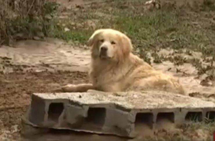 Σκύλος πλημμύρες Λακωνία