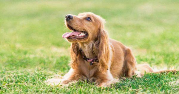 Οι σκύλοι είναι πιο πιθανό να δαγκώσουν αυτά τα άτομα