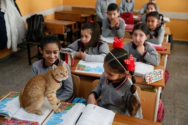 γάτος Γάτα