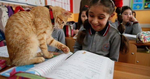 Η σχολική τάξη που υιοθέτησε έναν γάτο