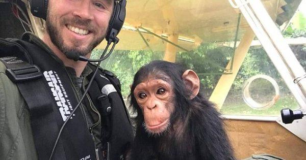 Μωρό χιμπατζής πιλοτάρει ελικόπτερο με τον άντρα που το έσωσε από λαθροκυνηγούς