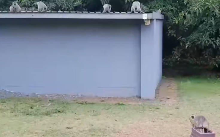 Η στιγμή που ένα μαϊμουδάκι σμίγει ξανά με την οικογένειά του