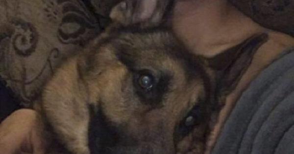 Ήρωας σκύλος δέχθηκε σφαίρες όταν μπήκε μπροστά από τον 16χρονο ιδιοκτήτη του για να τον προστατέψει από εγκληματίες