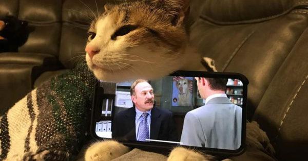 Γάτες που… κάνουν τα δικά τους!
