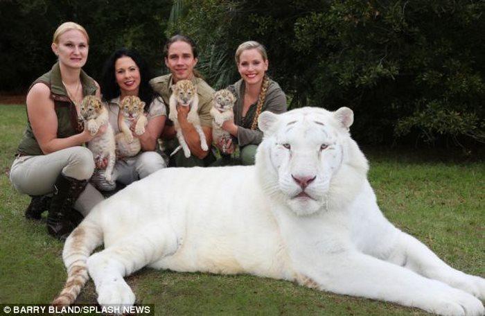 Τίγρης λιοντάρι