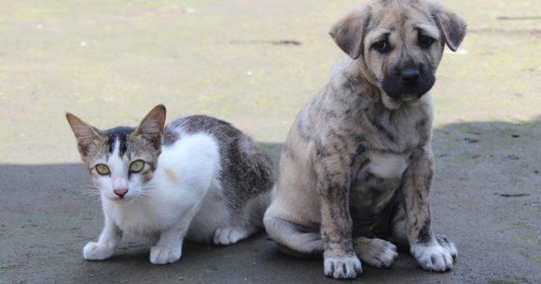 """""""Φωνή για τα ζώα"""": Να μην παριστάνουν τους έκπληκτους οι αρχές"""
