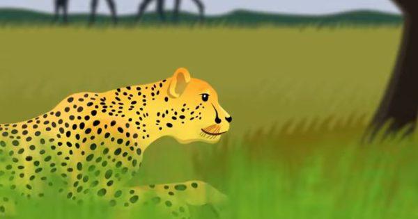 Αυτά είναι τα πιο γρήγορα ζώα του κόσμου