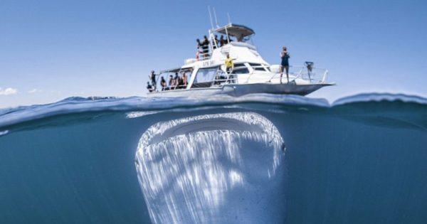 Tο μεγαλύτερο ψάρι στον κόσμο εμφανίστηκε κάτω από σκάφος