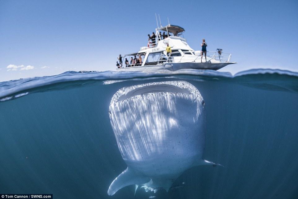 μεγαλύτερο ψάρι στον κόσμο