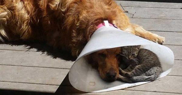 Είναι τέλειο να έχεις έναν φίλο όταν τον χρειάζεσαι